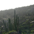 2007 10-Aruba Canyon||<img src=_data/i/galleries/2_Lances_Favorites/2007 10-Aruba Canyon-th.jpg>