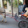 2008 10-Donkey Cart Yvoire France||<img src=_data/i/galleries/2_Lances_Favorites/2008 10-Donkey Cart Yvoire France-th.jpg>