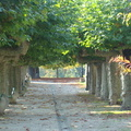 2008 10-Nyon Switzerland Path||<img src=_data/i/galleries/2_Lances_Favorites/2008 10-Nyon Switzerland Path-th.jpg>