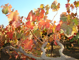 2009 10-Lodi California