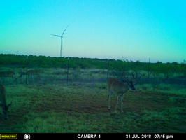 2018 Jul-Late Month Game Cam Pics