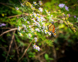 2018 10 - Gatlinburg Tennessee Butterfly2