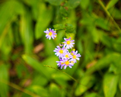 2018 10 - Gatlinburg Tennessee Tiny Wildflowers